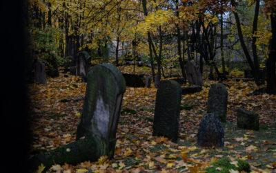 Obejrzyj wideoreportaż o cmentarzu żydowskim w Grodzisku Mazowieckim